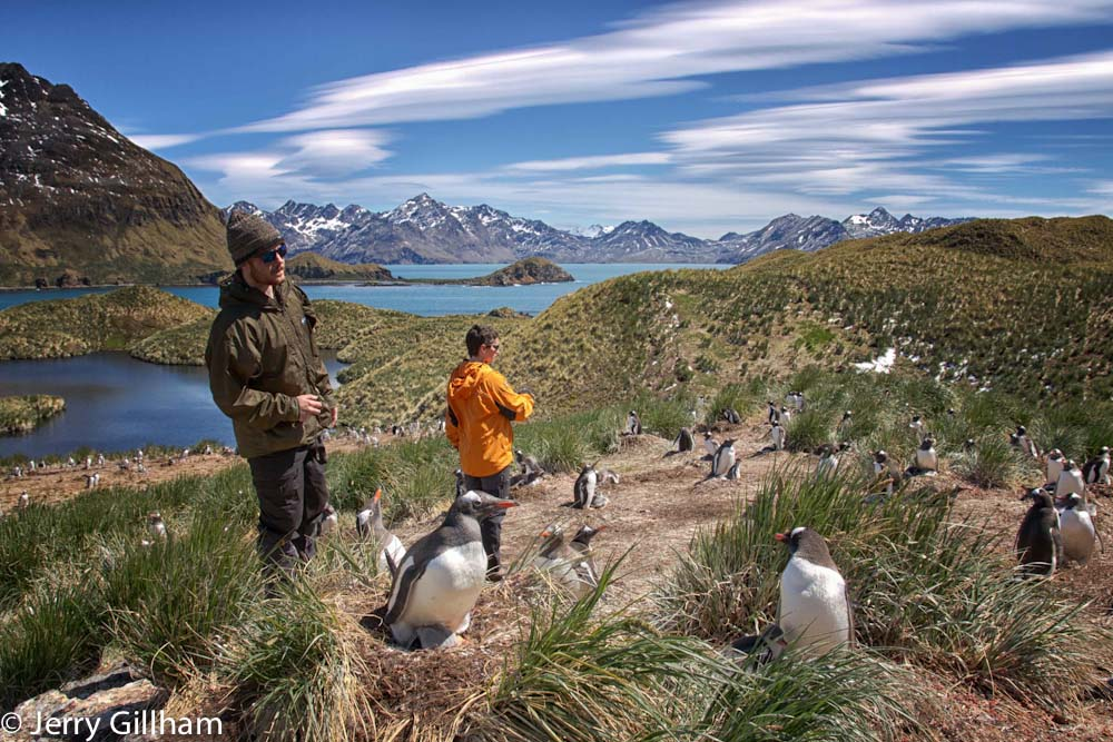 Higher predator scientist Kieran and doctor Fraser counting chick-containg Gentoo Penguin nests over at the study site at Maiviken.
