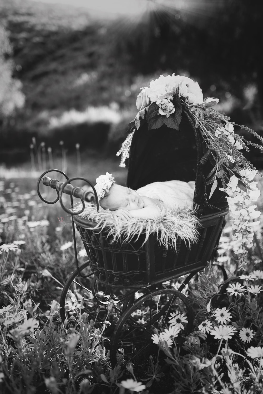 Black and White Newborn in Carriage