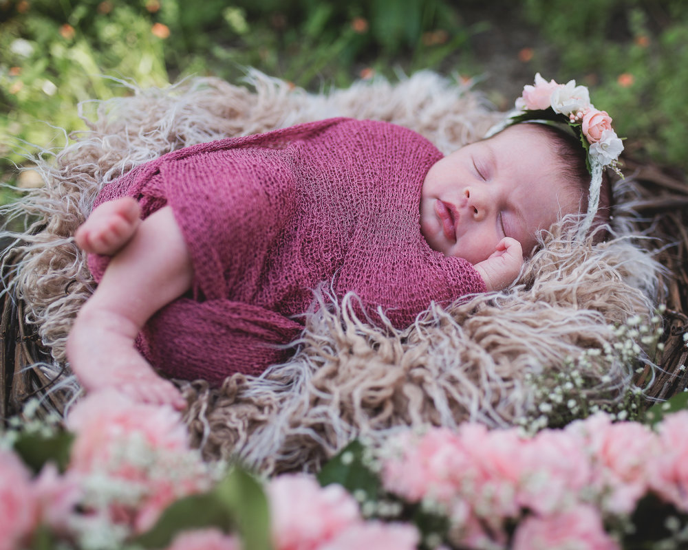 Newborn girl with pink carnation foreground.