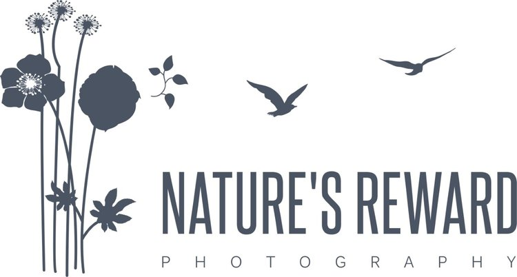 Nature's Reward Photography