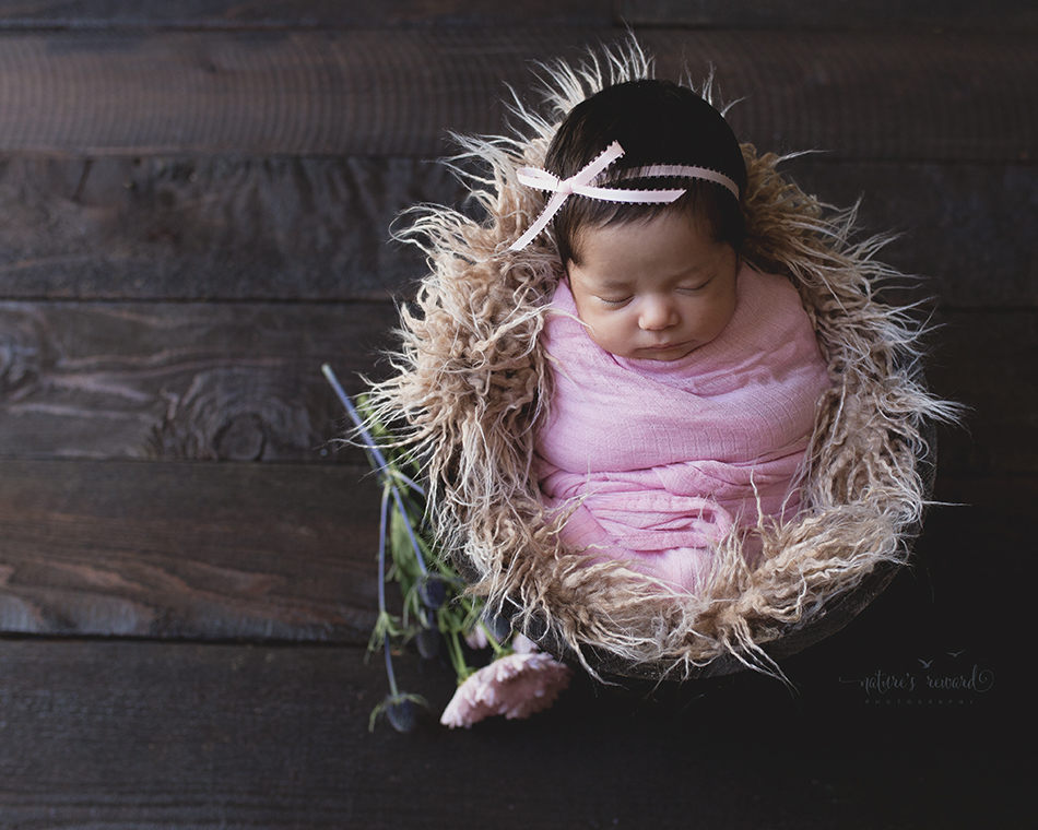 The light reads like a book in this baby in a bucket adorned in pink. Image by Nature's Reward Photography