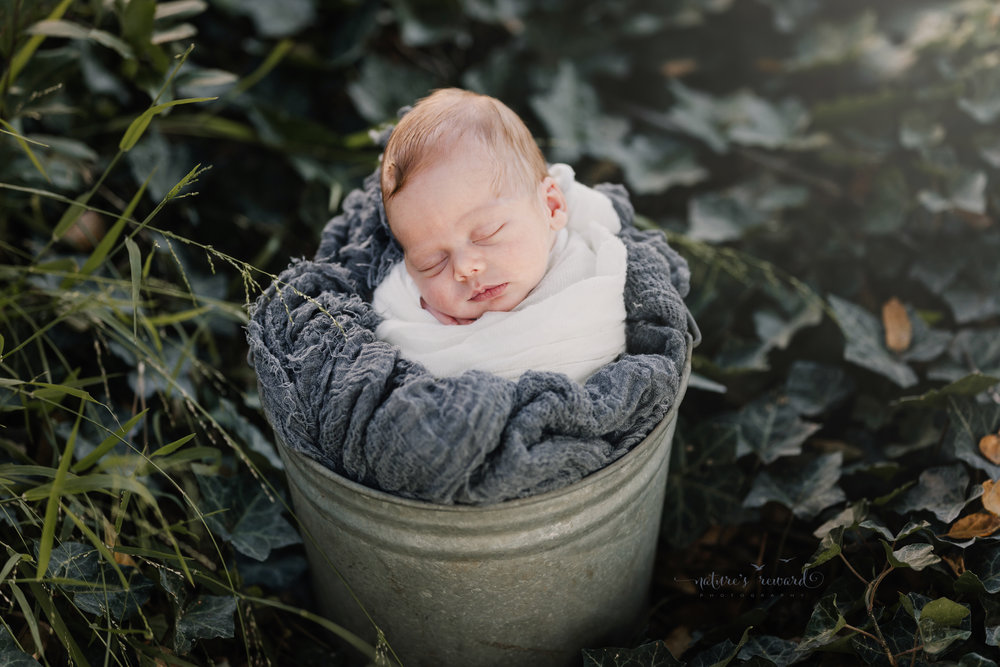 This baby boy in a ivy garden nestled into a pail and swaddled in shit and grey in this environmental portraitby Southern California newborn and family photographer Nature's Reward Photography