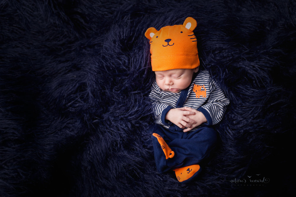 Baby boy in an outfit from home showing blues and orange wearing a cute tiger beanie nestled in a field of blue fur by Southern California newborn and family photographer Nature's Reward Photography