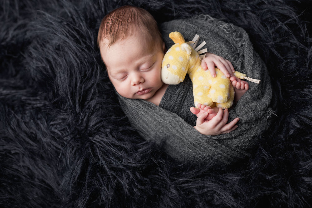 This beautiful newborn baby boy  portrait swaddled in grey  holding his baby giraffe from home by Southern California newborn and family photographer Nature's Reward Photography