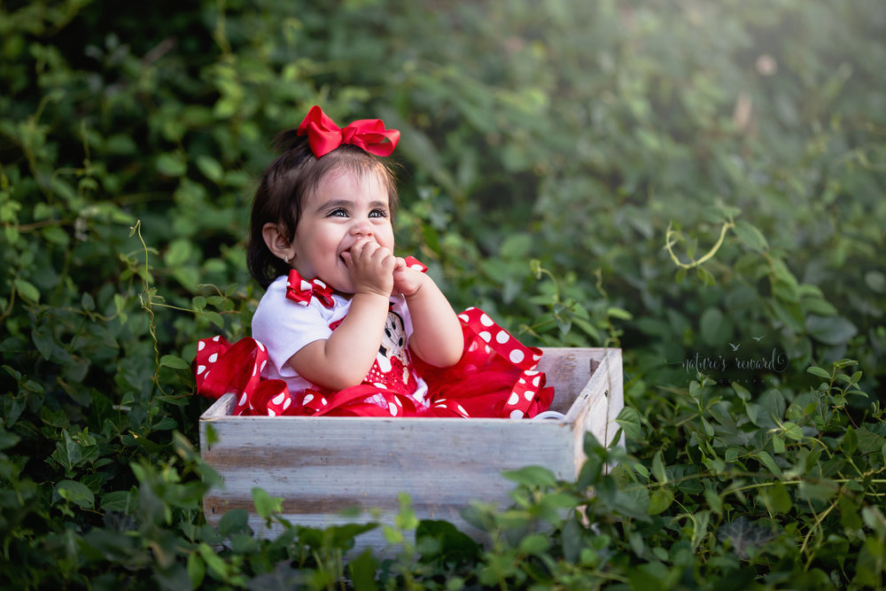 In a fit of giggles this darling baby girl wears a mickey ad Minnie inspired one year shirt and tutu while sitting in a box in an ivy thicket.  A portrait by Nature's Reward Photography