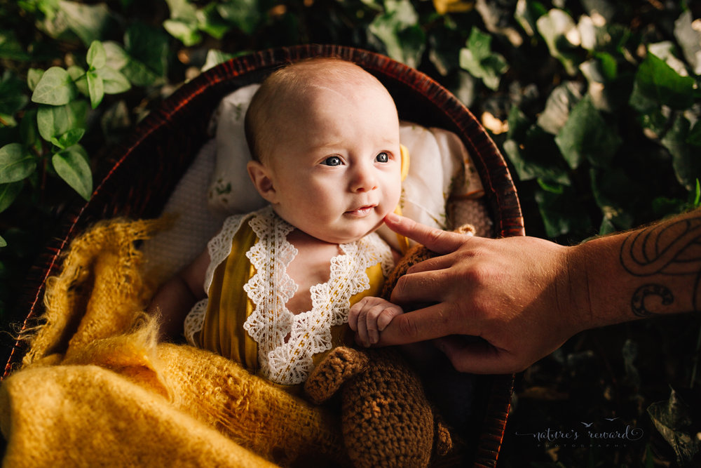 Three (3) month old baby in a yellow romper lined with white lace in a basket with a soft yellow blanket while holding a brown teddy in a basket with a lace lined pillow in a bed of Ivey in sun set light while holding daddy's finger in this portrait by Nature's Reward Photography.