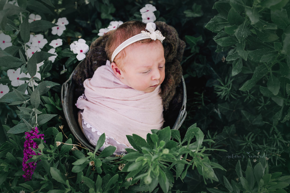 Newborn Baby Girl swaddled in pink lace in a garden with white flowers a bucket..  A Portrait By Nature's Reward Photography, a San Bernardino Family, Child, and Newborn Baby Photographer.