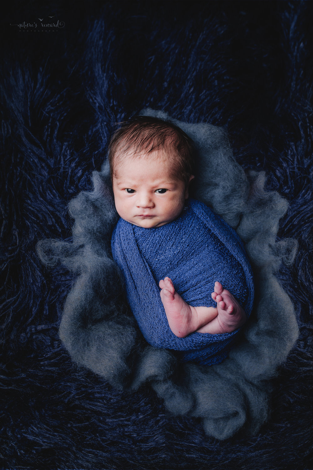Newborn Baby Boy swaddled in blue on a bed of blue fur and cotton in this portrait by Nature's Reward Photography
