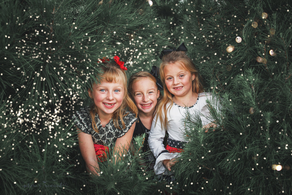 Beautiful triplet girls pose in lovely Douglas fir trees at a Christmas tree farm- A Portrait by Nature's Reward Photography
