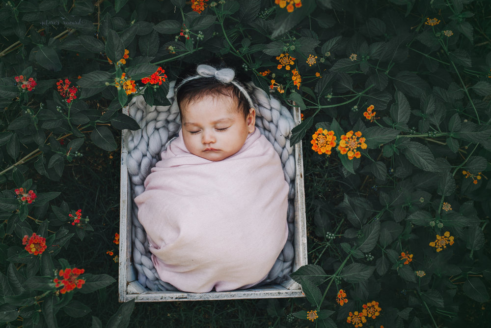 Lovely 10 week old newborn  baby girl swaddled in pink- a portrait by Nature's Reward Photography