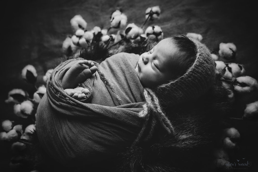 Newborn Baby boy swaddled in tan while laying on a bed of brown and black fur in a cotton blossom wreath wearing a tan bonnet - a black and white portrait by Nature's Reward Photography