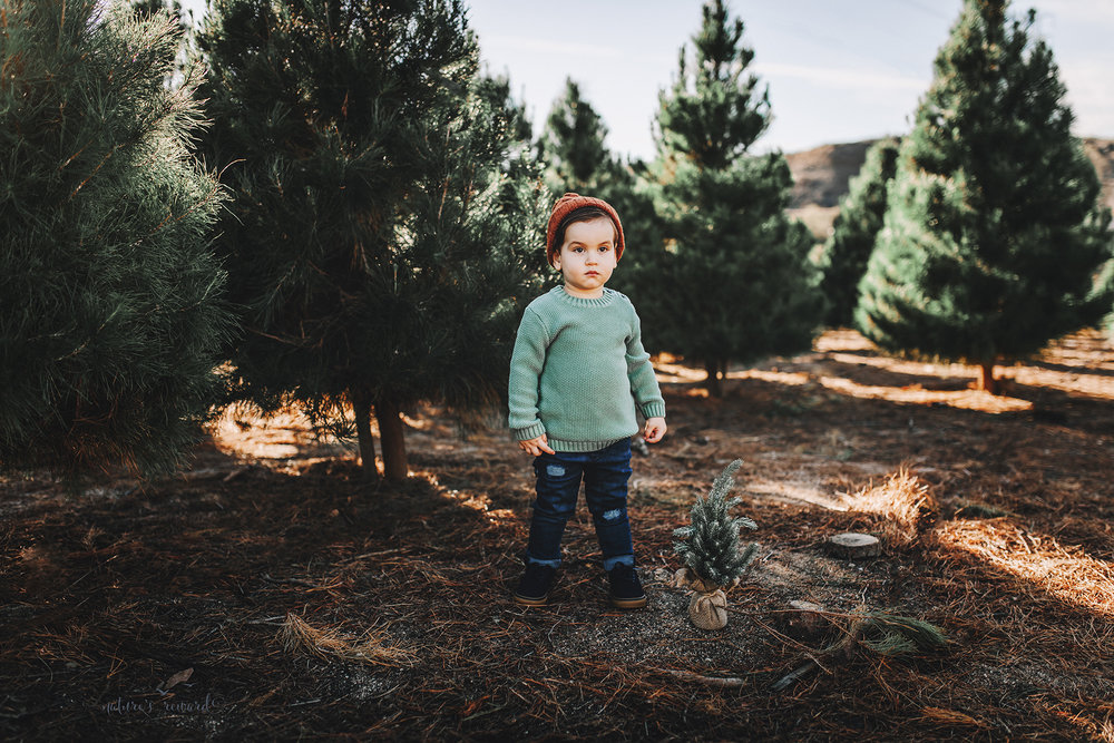Beautiful baby boy- A Christmas tree farm portrait by Nature's Reward Photography