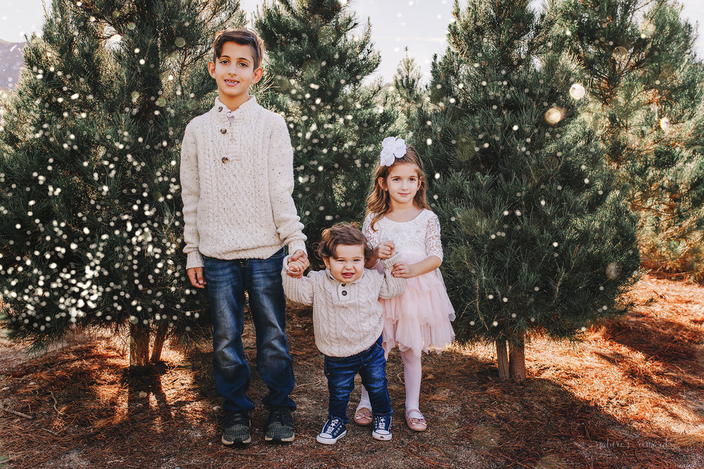 Big Brother, Big Sister and little brother A Christmas tree farm portrait by Nature's Reward Photography