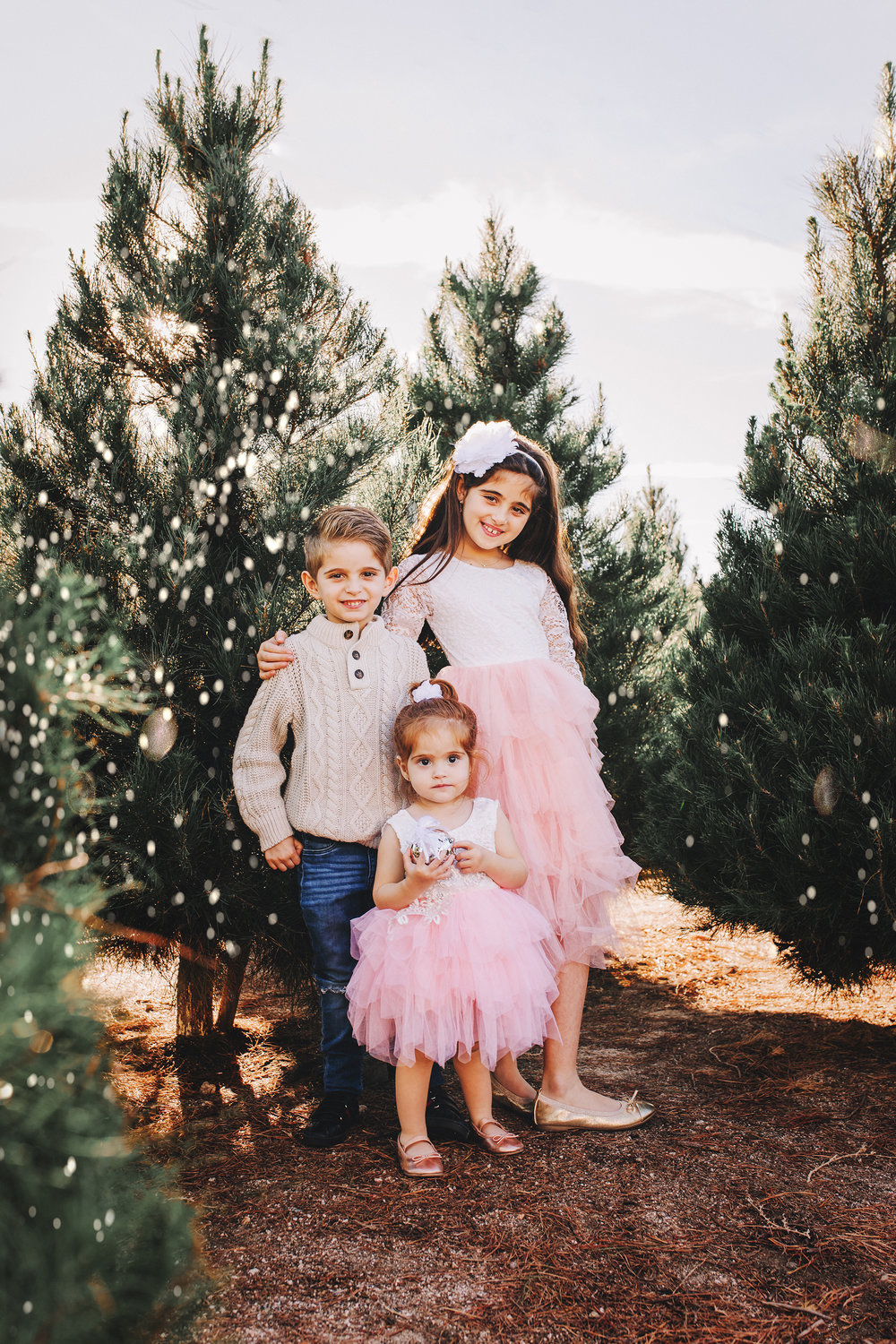 A sibling portrait with Big Sister, Big Brother, and Little Sister- A Christmas tree farm portrait by Nature's Reward Photography