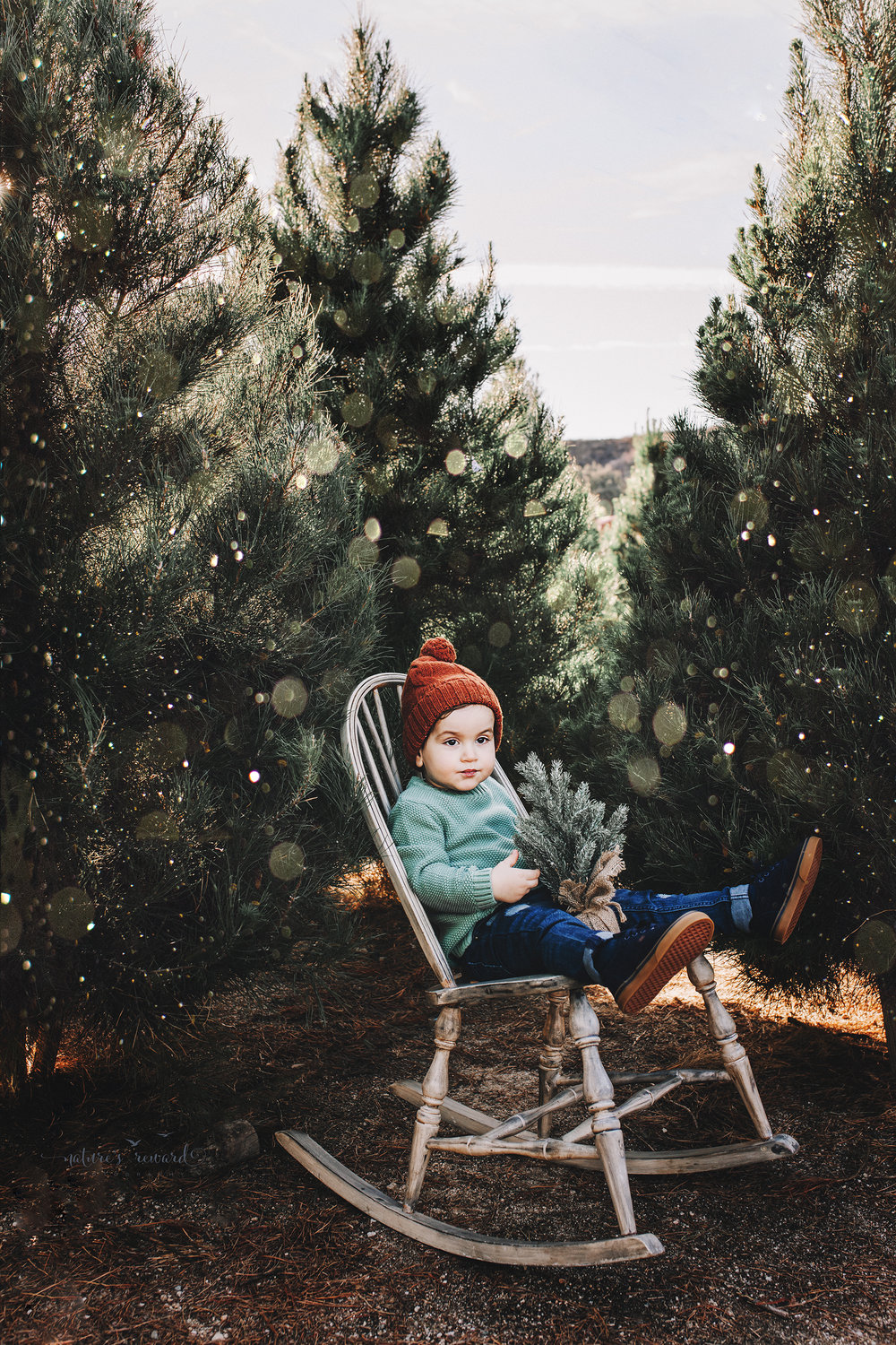 Toddler little boy - A Christmas tree farm portrait by Nature's Reward Photography