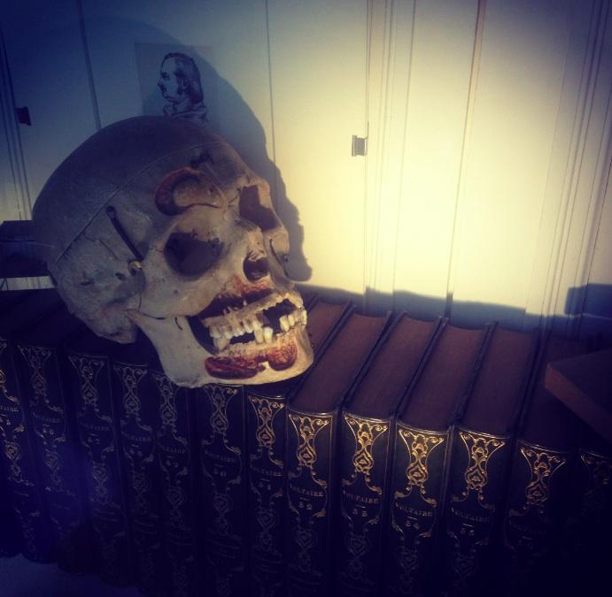 Skull Window Display