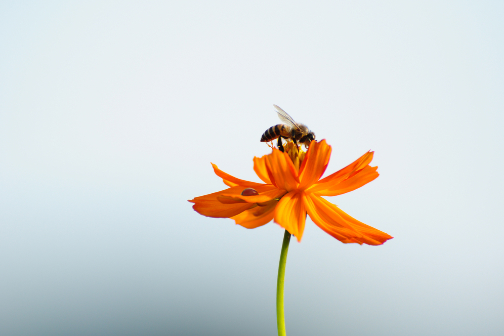 blume Bee Secret - Praise Bee. The ancient Mayans regarded the bee as a sacred symbol.