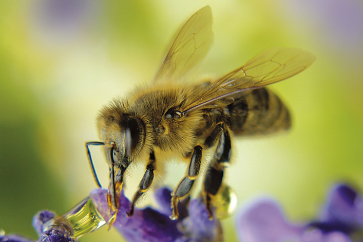 blume Bee Secret - Don't Blink. Bees have hair on their eyeballs.