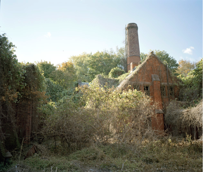 North Brother Island, photograph courtesy of Joel Meyerowitz