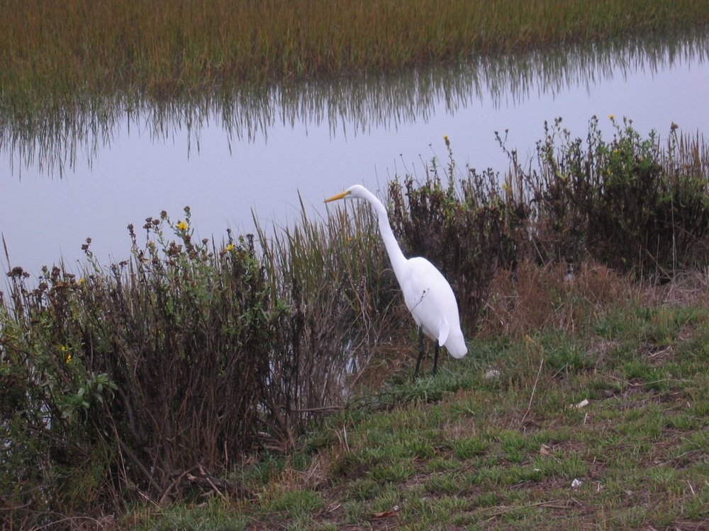 Birdwatch - Egrets, cormorants, oystercatchers and more than 140 other species inhabit the Bulb's diverse habitats. Learn about them on our nature walks.