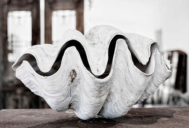 Clam Wobble, Hannah Lemholt