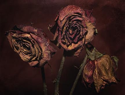 Dead Flowers, Robin, 2012