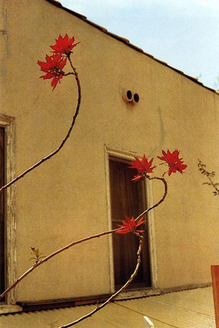 Untitled (Flowers in Front of a Window), William Eggleston, 1970