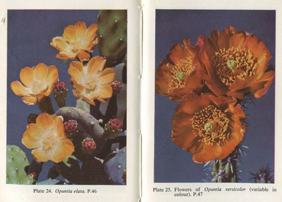 The Observers Book of Cacti and Other Succulents, S.H. Scott, 1958