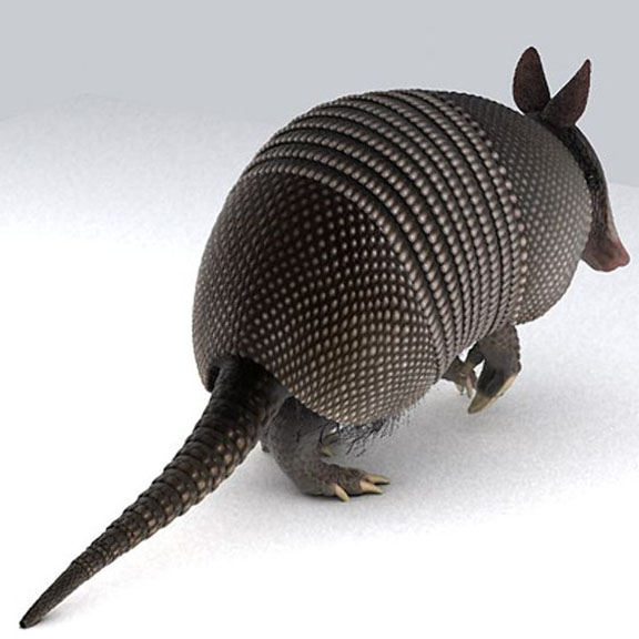 Nine Banded Armadillo (Dasypus Novemcinctus) Linneaus 1758, Image Source Unknown