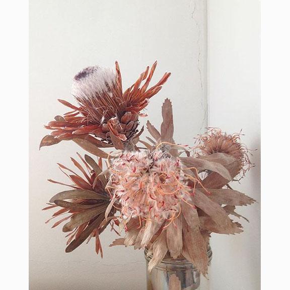Emilie Patterson, Studio Sistas, Dead Flowers