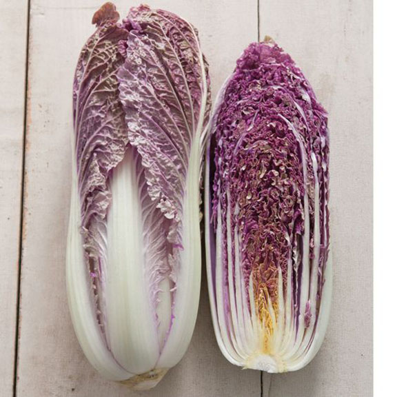Cabbage red dragon, brassica rapa pekinensis, johnnys selected seeds, 2018