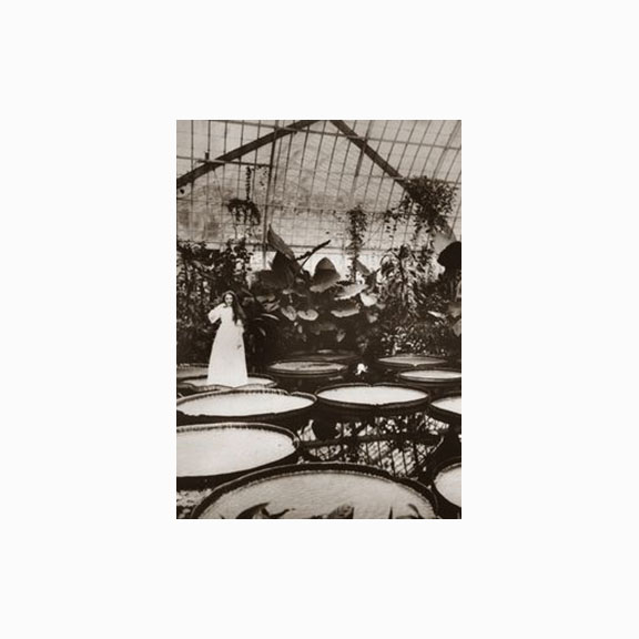 Victorian Era Photo of a Woman standing on a Victora Water Lily from the Nymphaeaceae Plant Family, Phipps Conservatory, Pittsburgh Pennsylvania