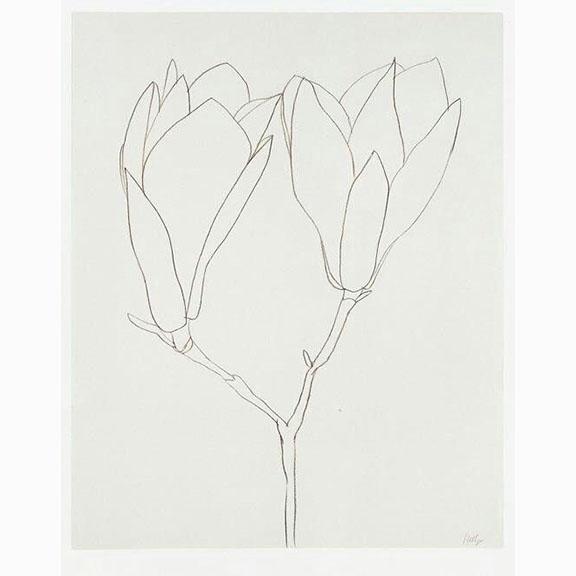 Ellsworth Kelly, Magnolia 1965