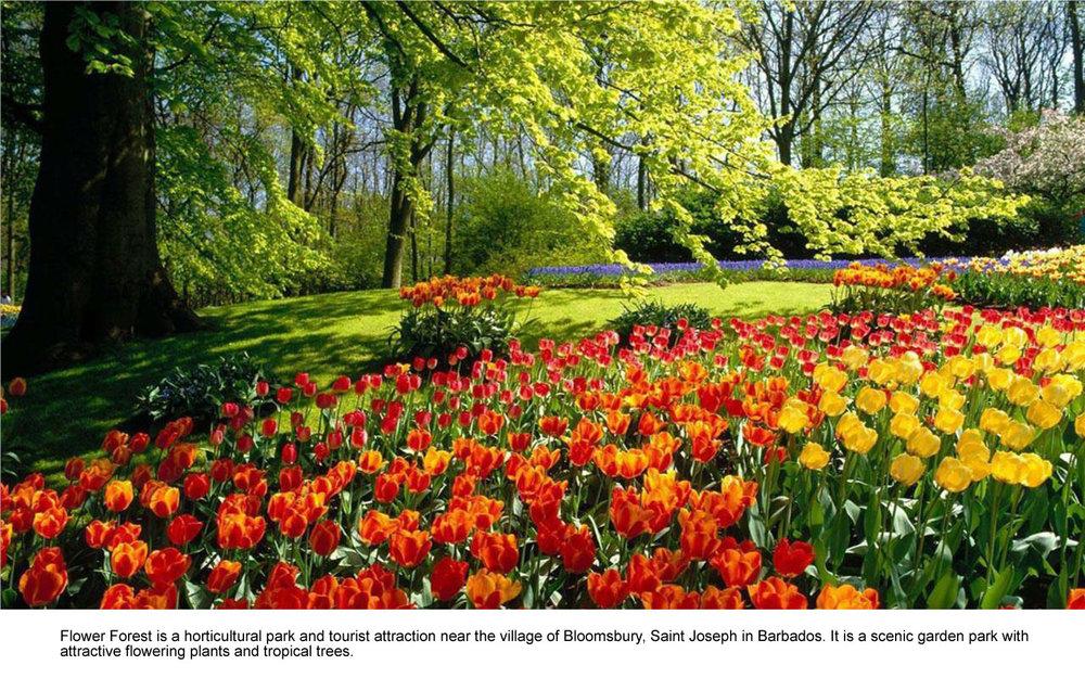 Flower Forest.jpg