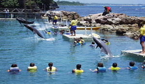 Dolphin Cove $US 230.jpg