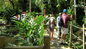Coyaba Gardens   From Ocho Rios pier or nearby hotels,   US $20 per person  (Inclusive of Entrance Fee & Shuttle to and from the park).