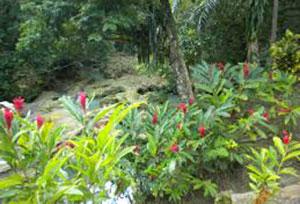 Island-of-Jamaica.jpg