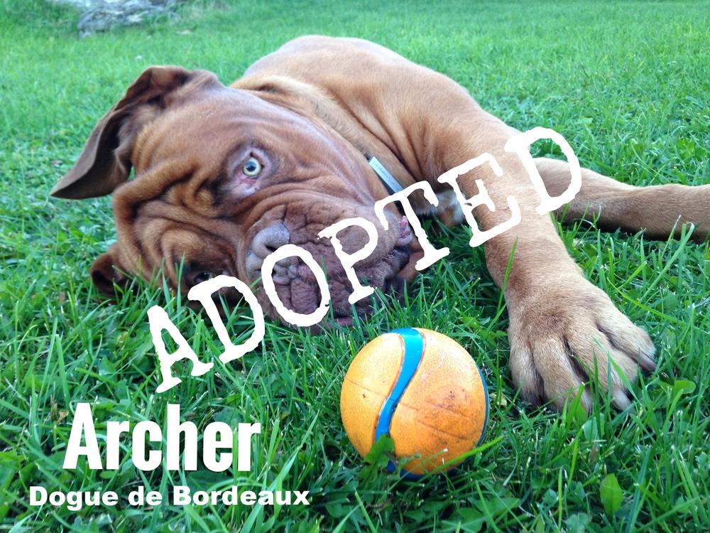 Archer_ball.JPG