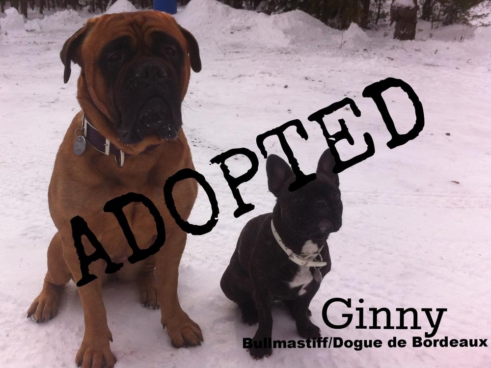 Ginny_with Frankie.jpg