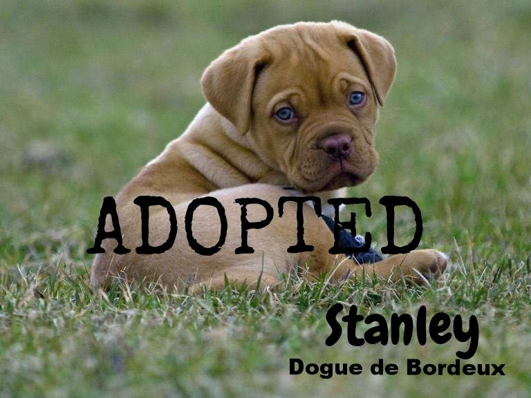 Stanley_huh?.jpg
