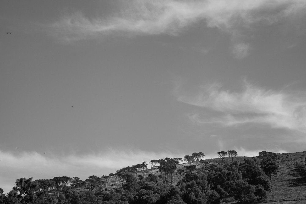 Trees on Signal Hill, Cape Town
