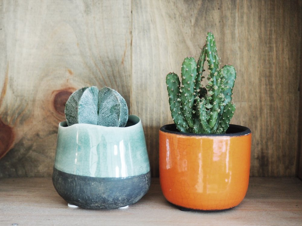 The little cacti and pots we took home. Shot @SE15's flat