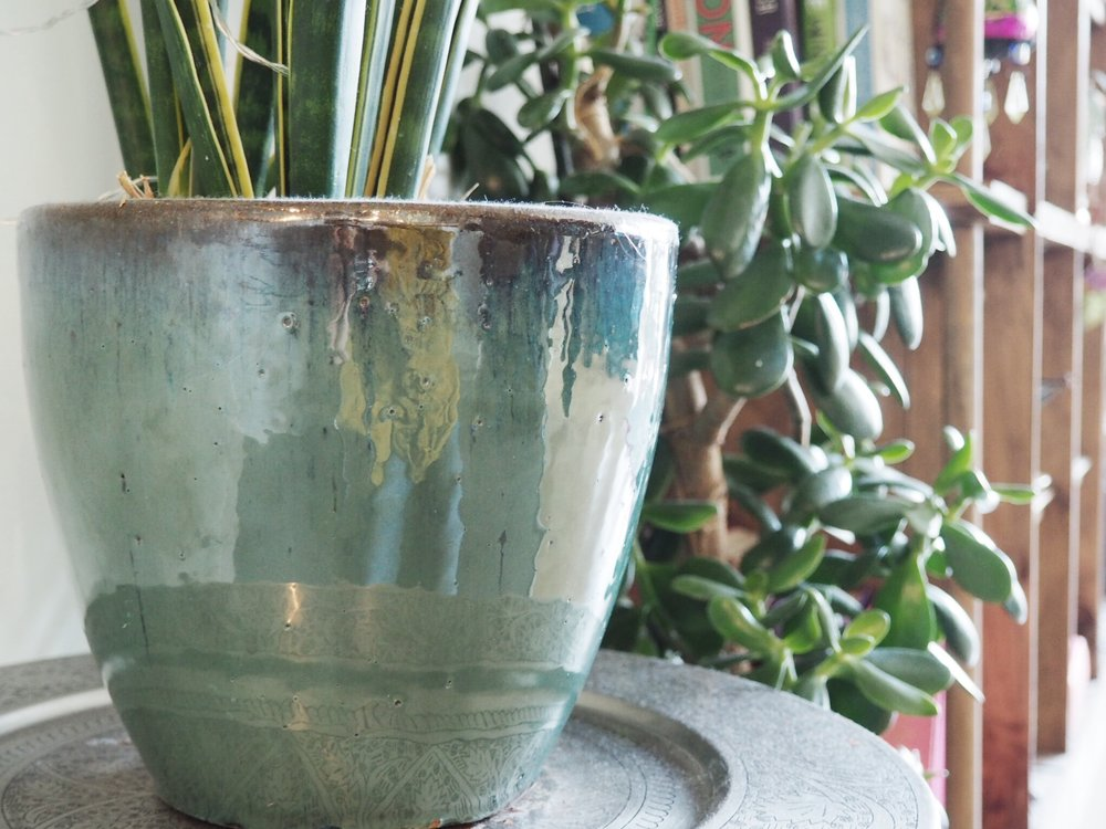 One of the many pots from The Nunhead Gardeners shot @SE15's flat