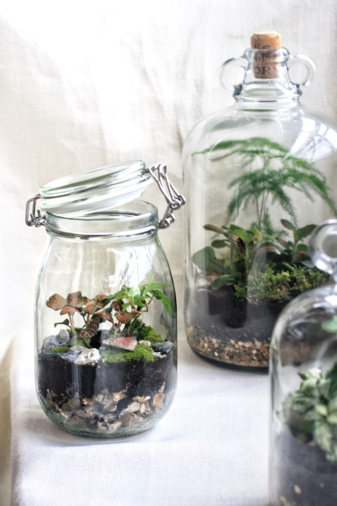 Image source; Jar and Fern