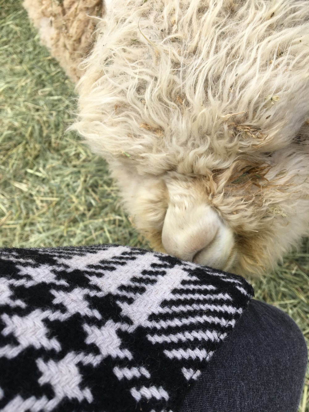 Sprinkles, the baby, kept nuzzling my leg. Unfortunately for him, I had no milk to share!