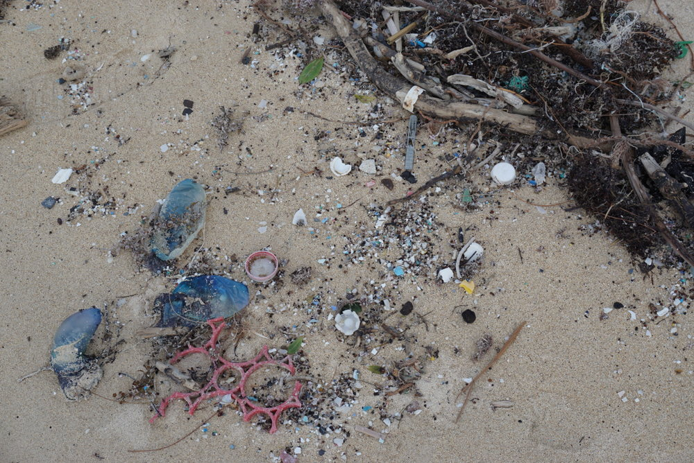 Plastic littering the shores in Bermuda. (The blue things are jellyfish!)