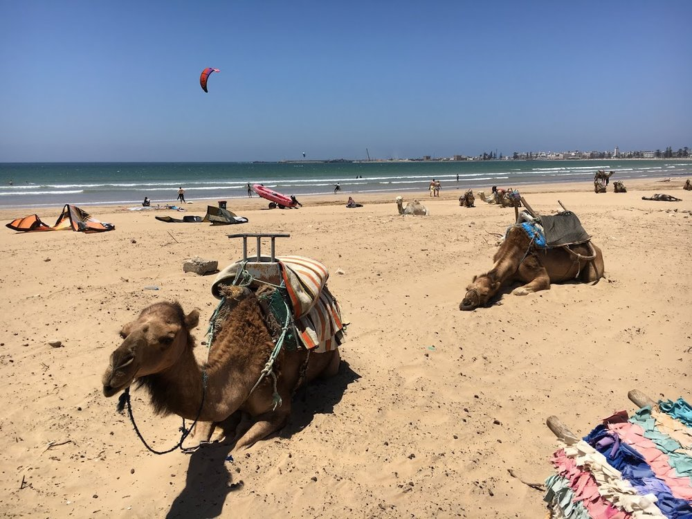 Essaouira_Camel1.JPG