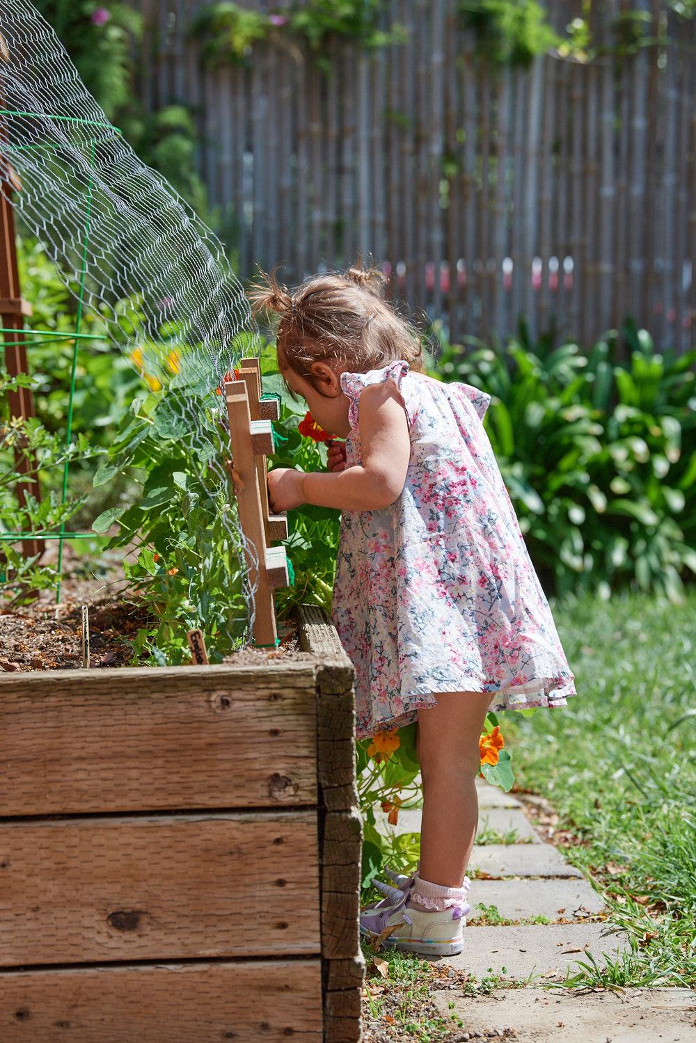 a toddler garden u2014 quik chik