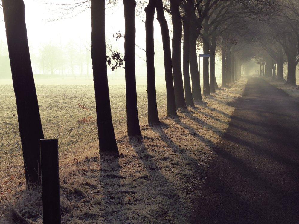 row-of-trees-2168579.jpg