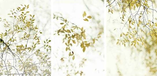 "Thea Schrack,   Branches, (triptych),   36""x72"", photo encaustic, courtesy of ArtHaus"